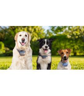 BAZAR - Petkit Fresh Smart miska pro psy a kočky 0,45l - klubíčka - Rozbaleno